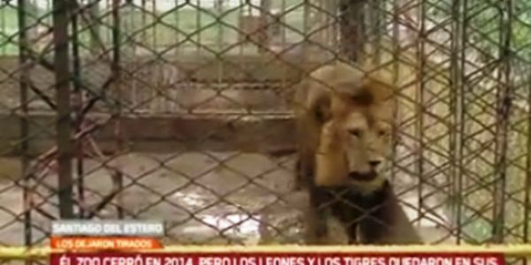 Good Lions and Tigers are abandoned at a Zoo in Argentina Sign for their freedom
