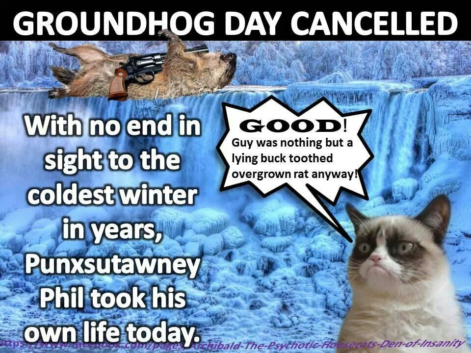 grumpy cat groundhog day cancelled