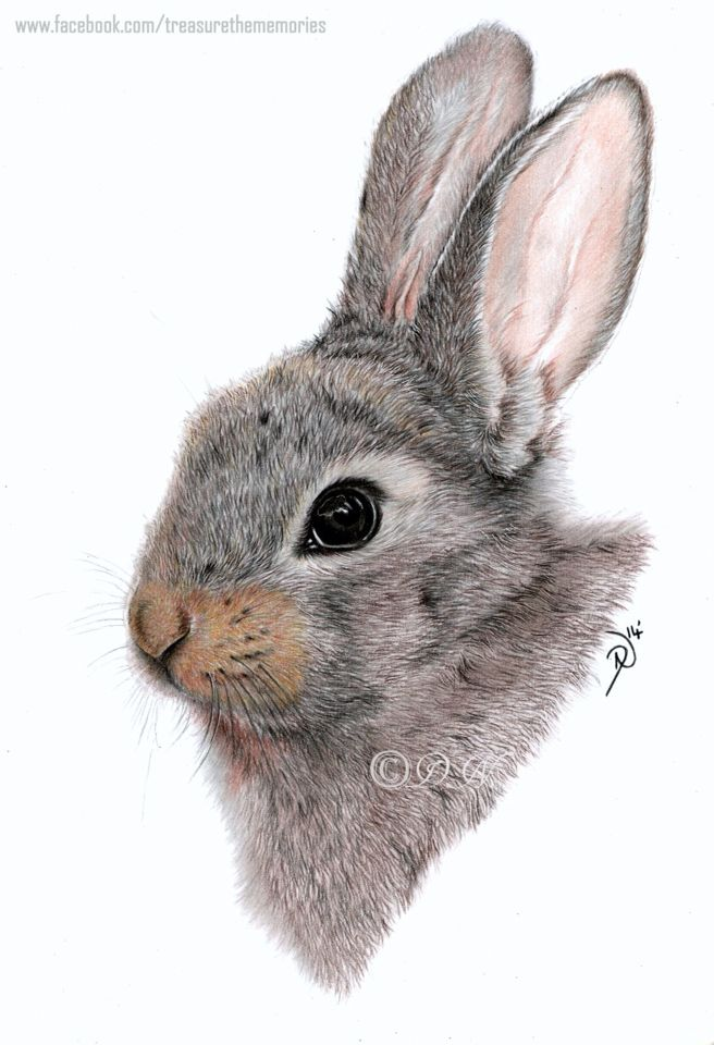 Baby Bunny A4 Coloured Pencil Drawing Painting Graphic Design