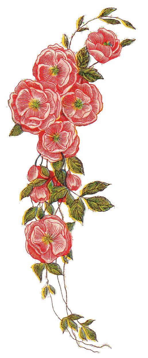 vintage floral png - G...