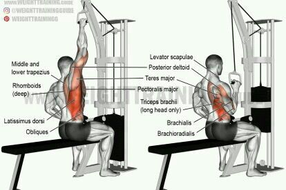 pin by roberto reyes on back work out pinterest shoulder