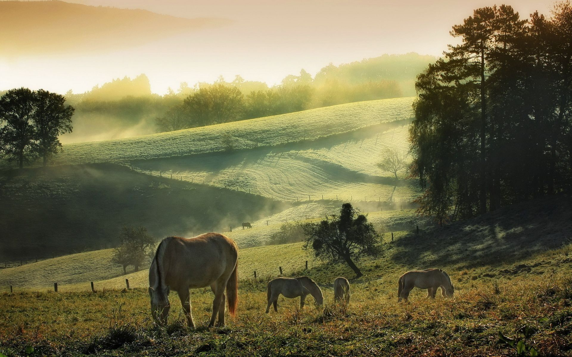 Must see Wallpaper Horse Landscape - 0d483bb262942cf517a713b13f8e8b92  You Should Have_366320.jpg