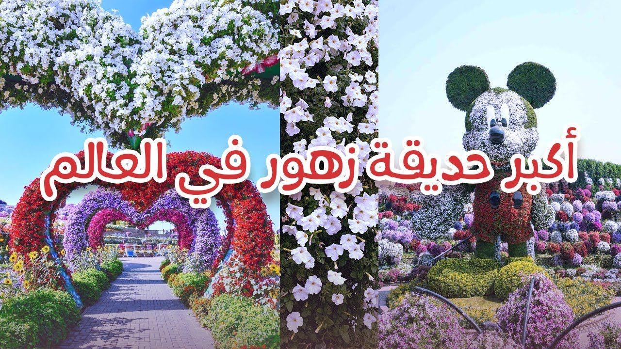 حديقة دبي للزهور أكبر حديقة في العالم Dubai Miracle Garden Jan 2020 Youtube Miracle Garden Dubai United Arab Emirates