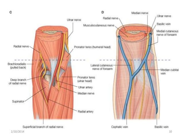Image result for cubital fossa anatomy | 03_UpperExtremity ...