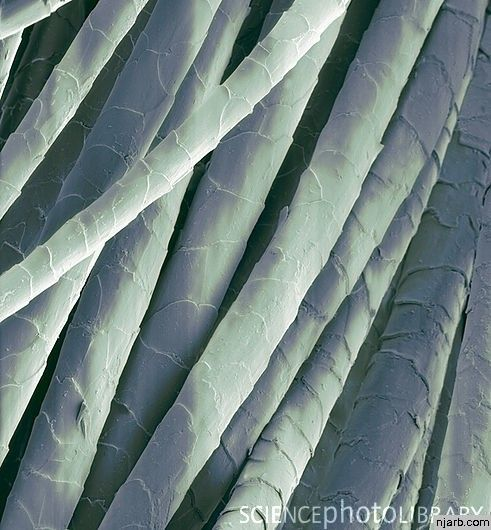 Cashmere Wool Fibres Sem Microscopic Images Electron Microscope Images Macro Photography