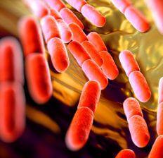 Gut bacteria benefits - Dr. Axe