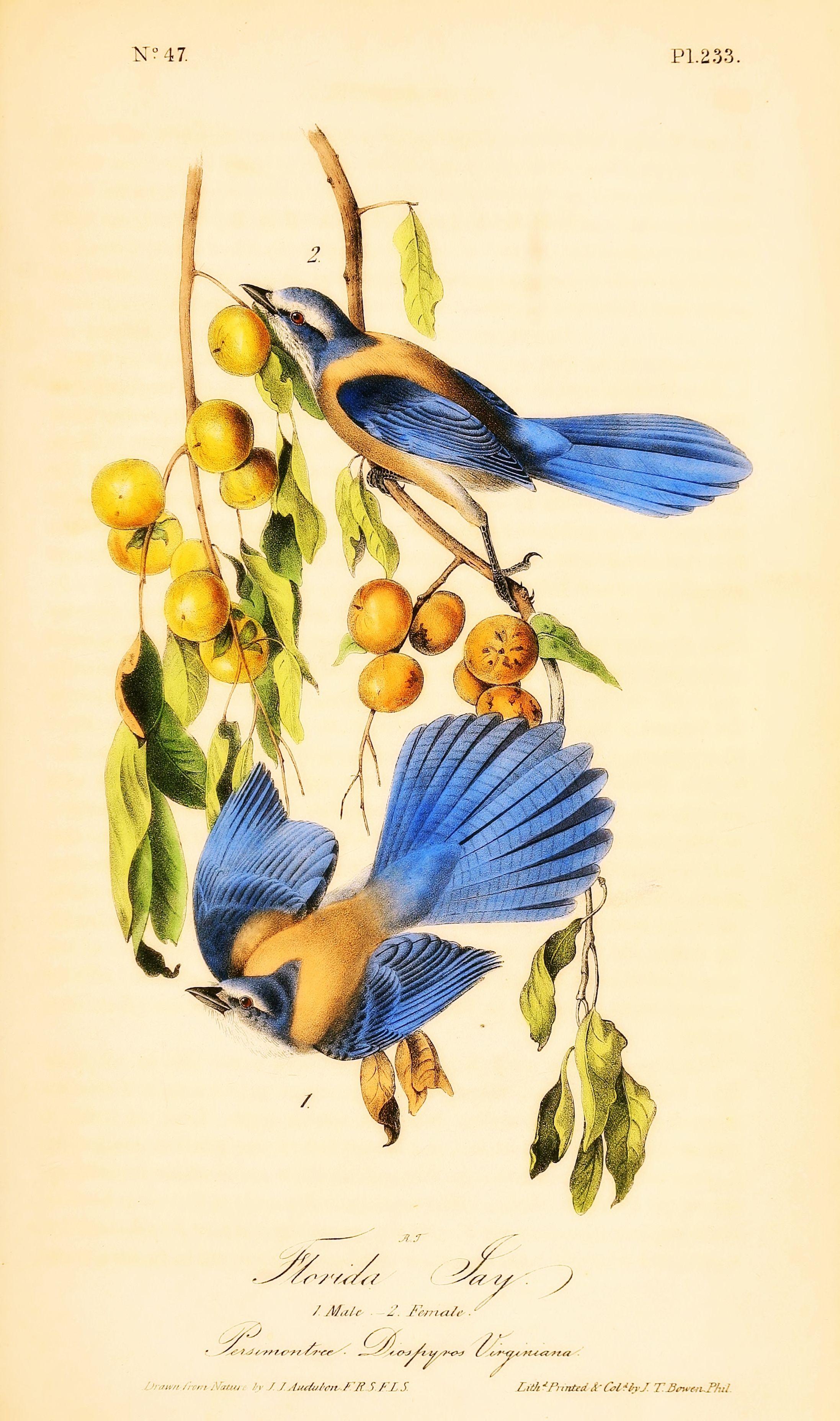 Pin de javier magdaleno en Birds | Pinterest | Pájaro, Ilustracion ...