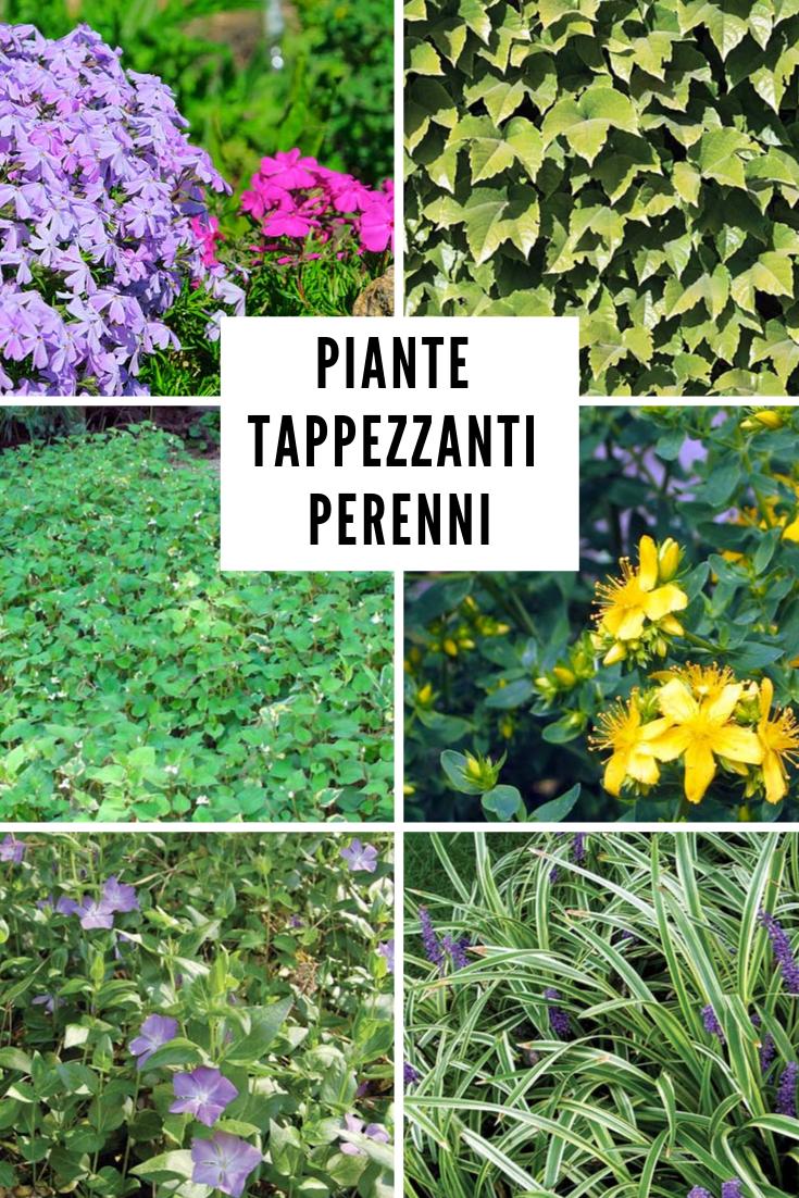 Piante Perenni Resistenti Al Freddo pin su garden