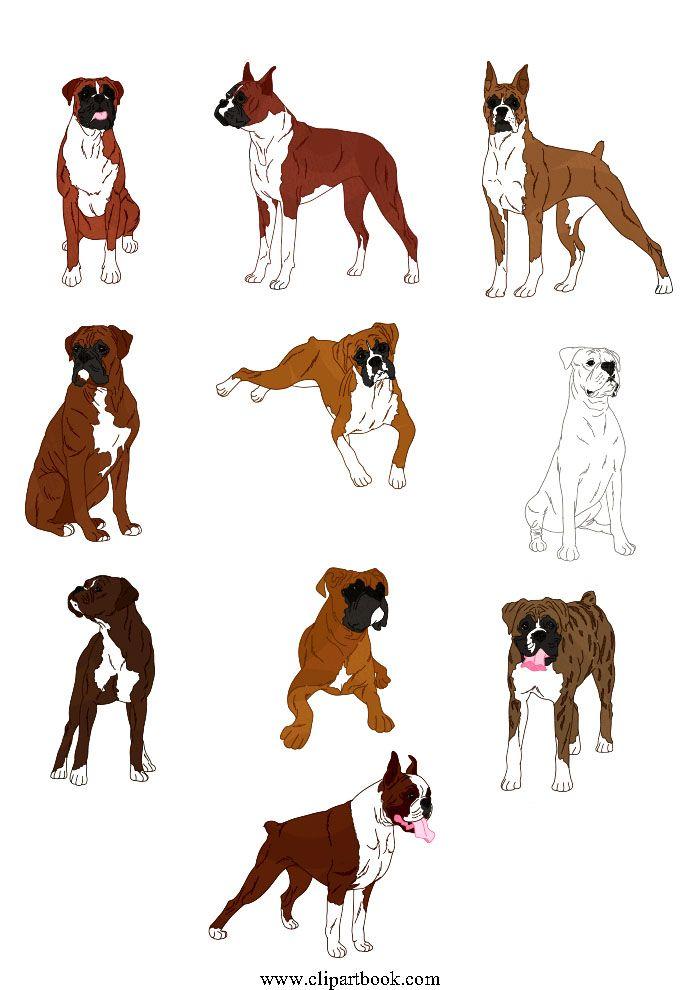 le realistic boxer dogfree vector clipart designs for digitizers rh pinterest com Boxer Dog Silhouette Clip Art Boxer Dog Outline