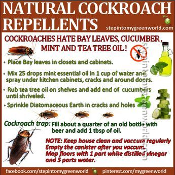 BY POPULAR DEMAND Aggressive Cockroach Repellents Did You Know - How to get rid of cockroaches in kitchen cabinets
