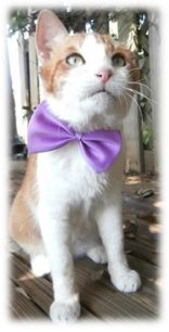Bow-Tie received love and medical treatment from Cat Depot