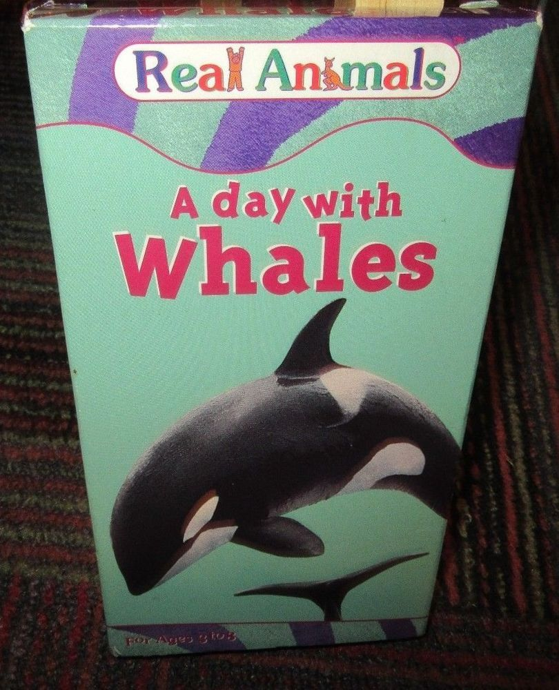 Real Animals A Day With Whales Vhs Video By Kid Vision Incl 4 Sing