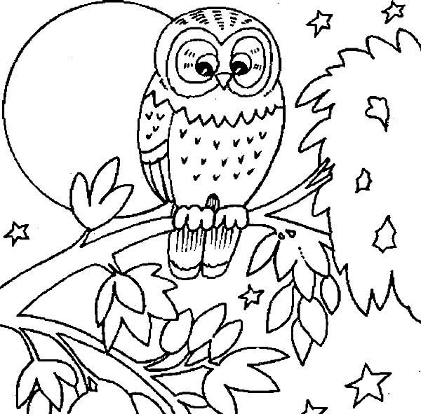 Coloring Moon Owl Pages 2020 Check More At Https Mister