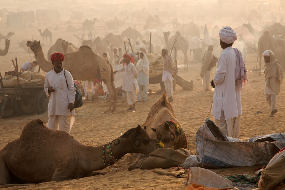 #CamelSafariinIndia, 	http://sitholidays.com/rajasthan-tour-package.php	https://www.youtube.com/watch?v=o1neRfeVVZA	http://sitholidays-blogs.blogspot.in/				http://s1318.photobucket.com/user/sitholidays/library