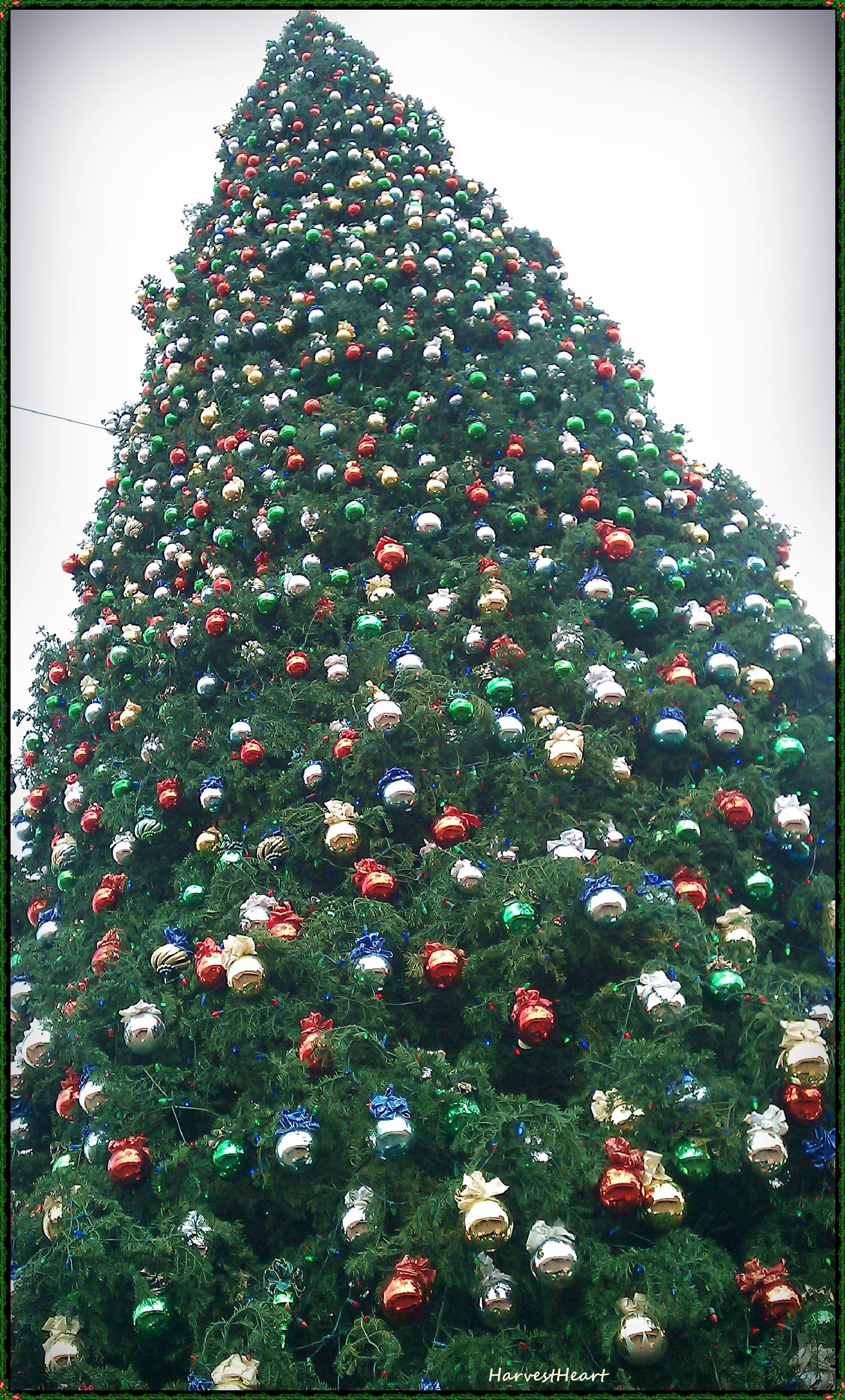 Anthem Christmas Tree tallest holiday tree in Arizona