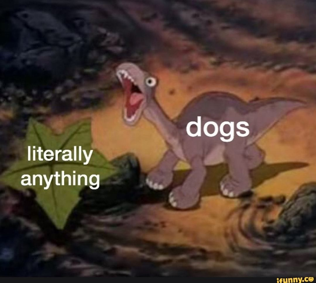 Dogs literally anything - )