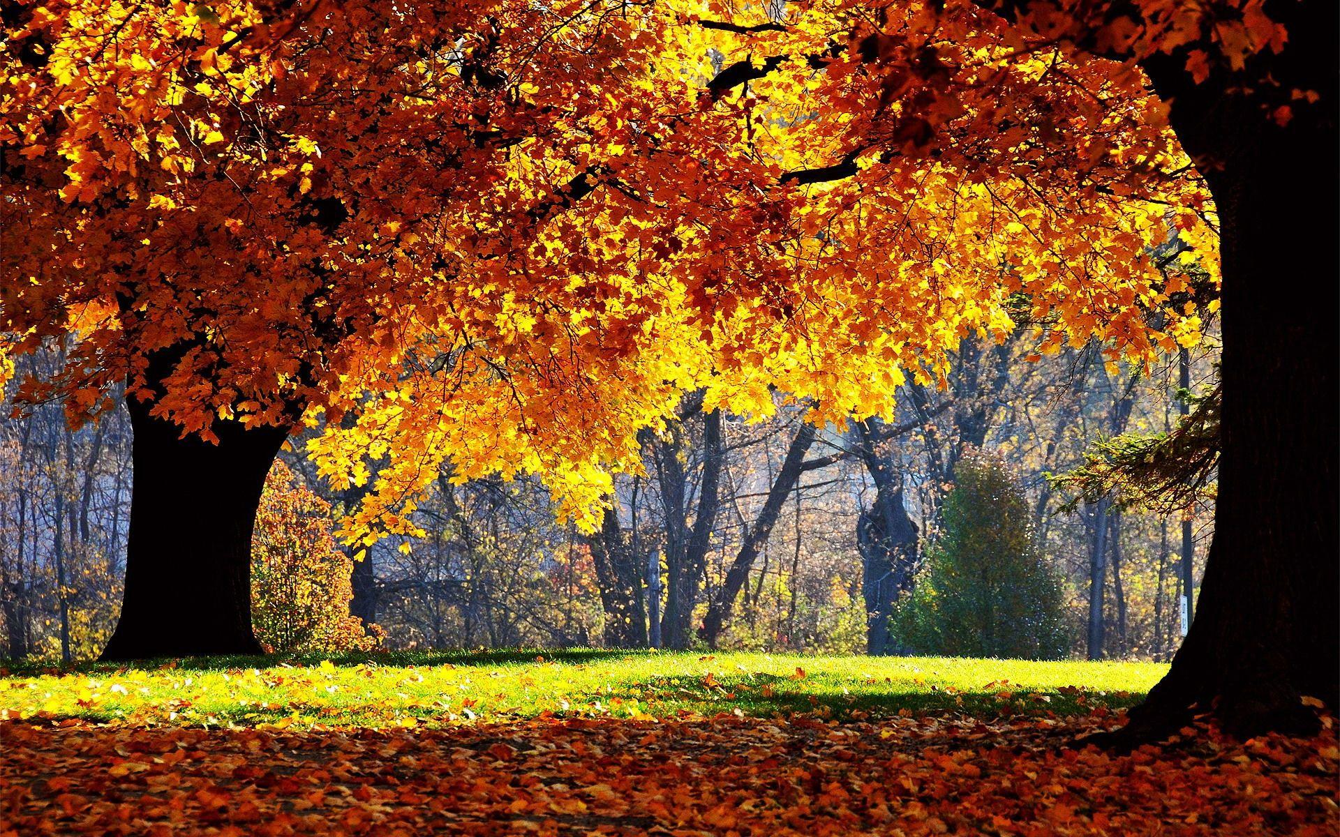 foto de Arrières plans Foret Automne | Forêt d'automne, Arbre automne et ...