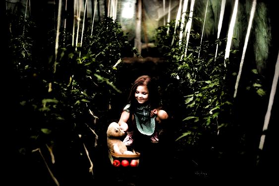 Sezon na pomidory 🍅 #bonbons #photoart #photography #photographer #photoshoot #kidsportraits #model #polishgirl #nature #session #plener #bear #childhood #summer #tomato #garden #vegetables #workshop #followme