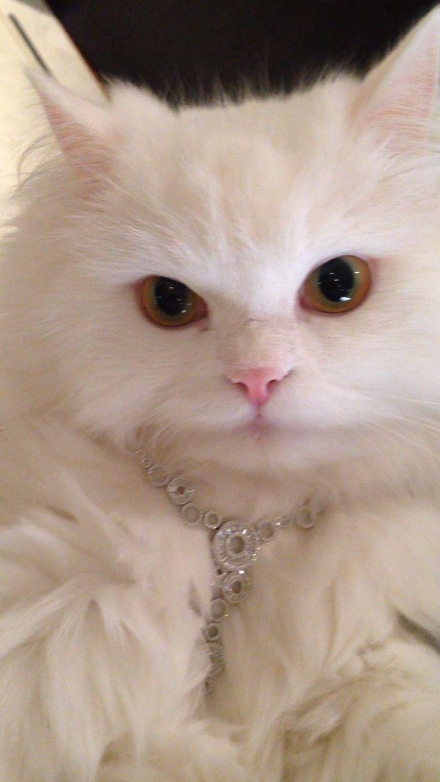 diamonds r a cat s best friend