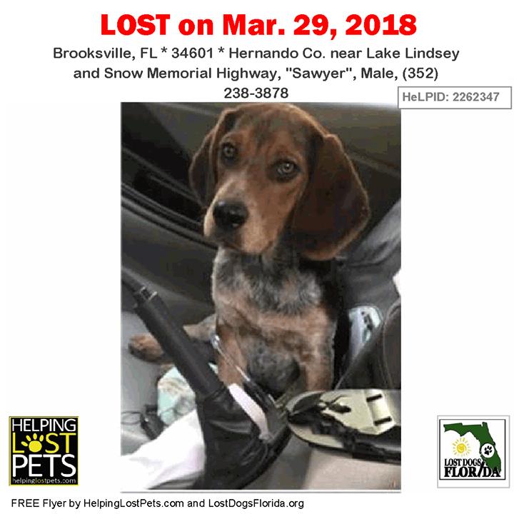 Have You Seen This Lost Dog Lostdog Sawyer Brooksville Lake