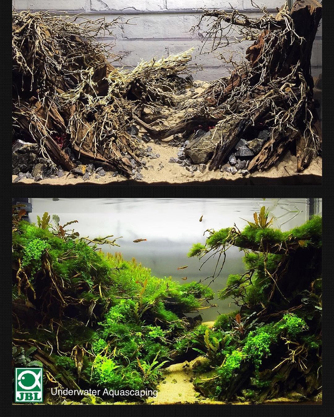 Naturalaquarium Aquascaping Jblpro Hardscape Underwateraquascaping Aquarium Landscape Aquarium Design Aquascape Aquarium