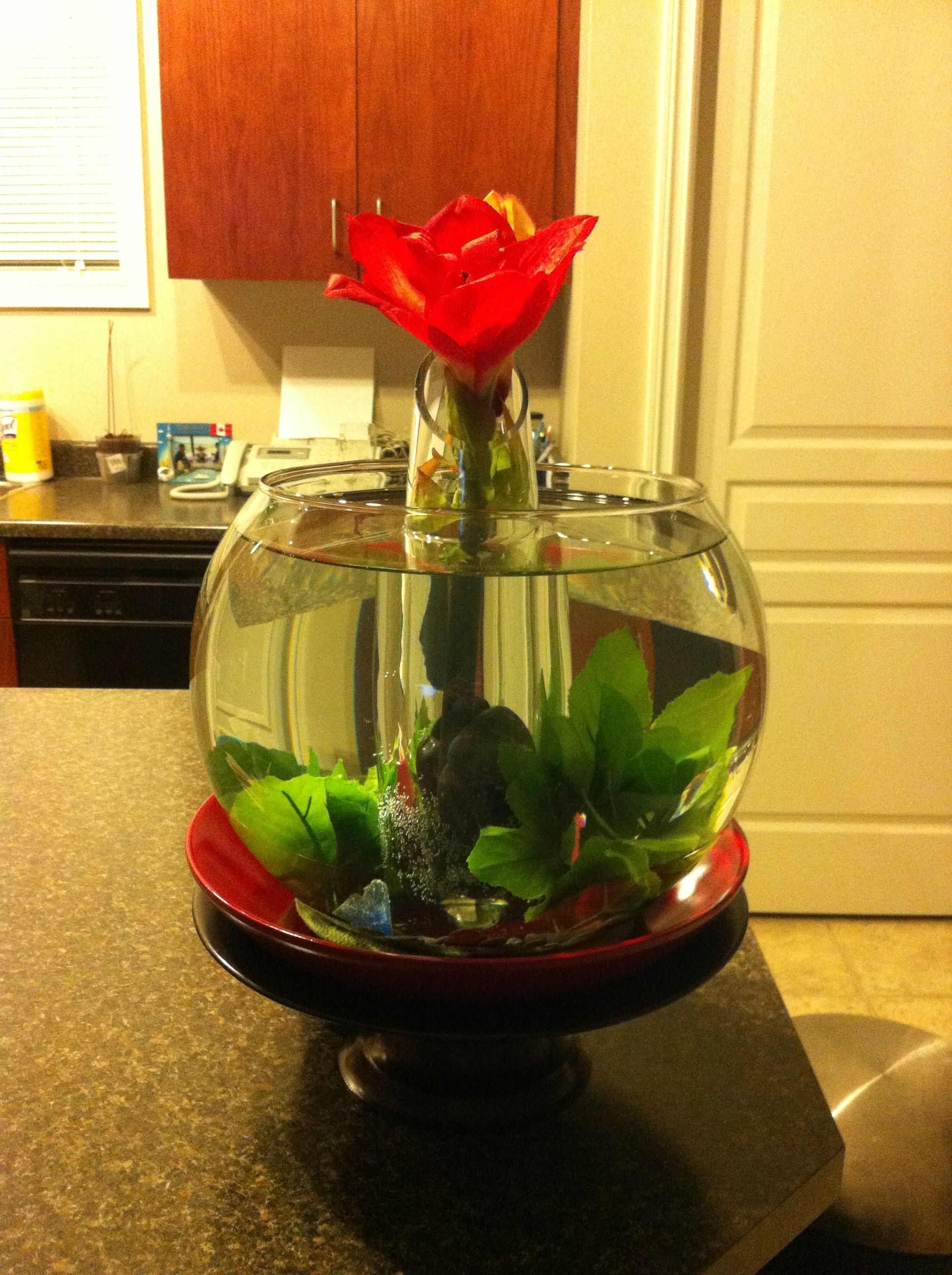 Creative betta fish bowl ideas for Fish bowl ideas