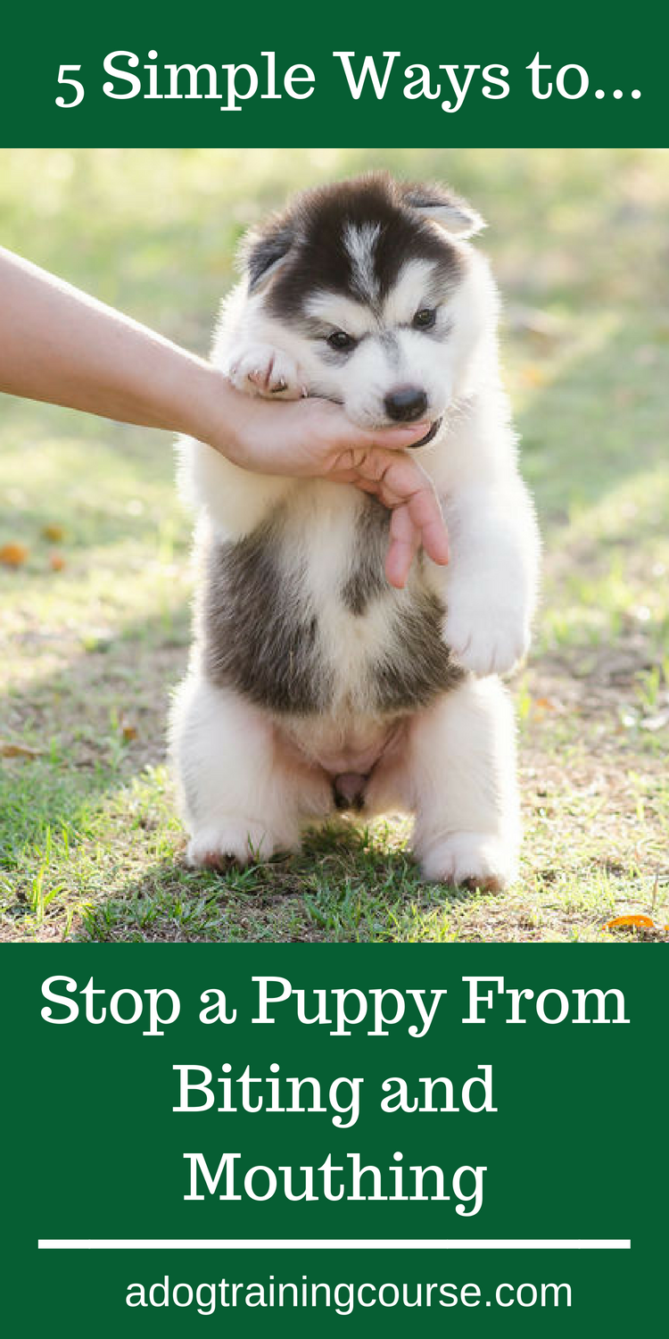 5 simple ways to Stop a Puppy From Biting and Mouthing. So