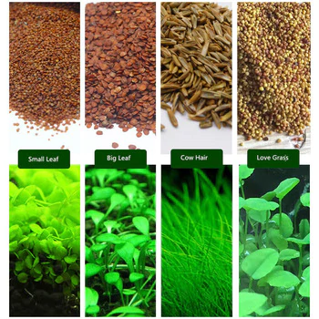 Aquarium Plants Aquatic Water Grass Seeds Cow Hair Love Lucky Seeds Mr Dog Cat Water Plants Water Grass Planted Aquarium