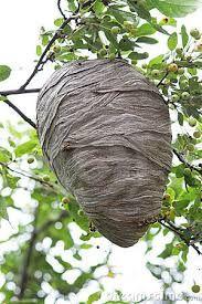 File:Natural Beehive and Honeycombs.jpg - Wikipedia  Natural Beehives