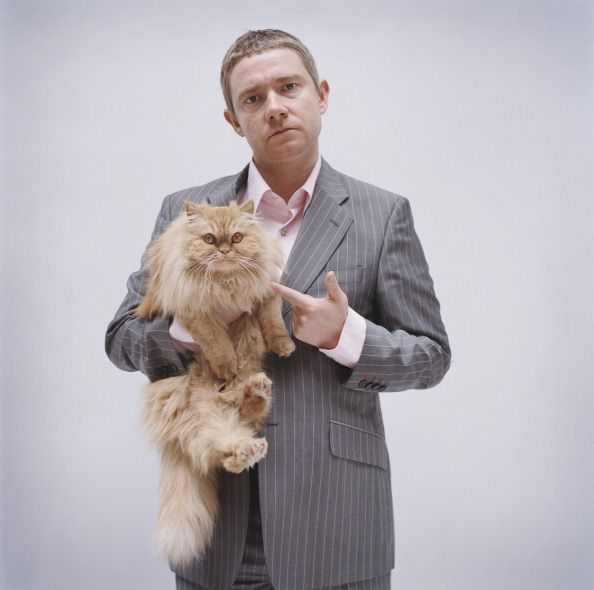 Image result for Martin Freeman cats