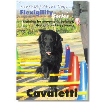 S24 95 Cavaletti With Kay Laurence Fitpaws Dog Fitness Video Ball Dynamics Fitpaws Dogs Dog Conditioner Summer Camps For Kids