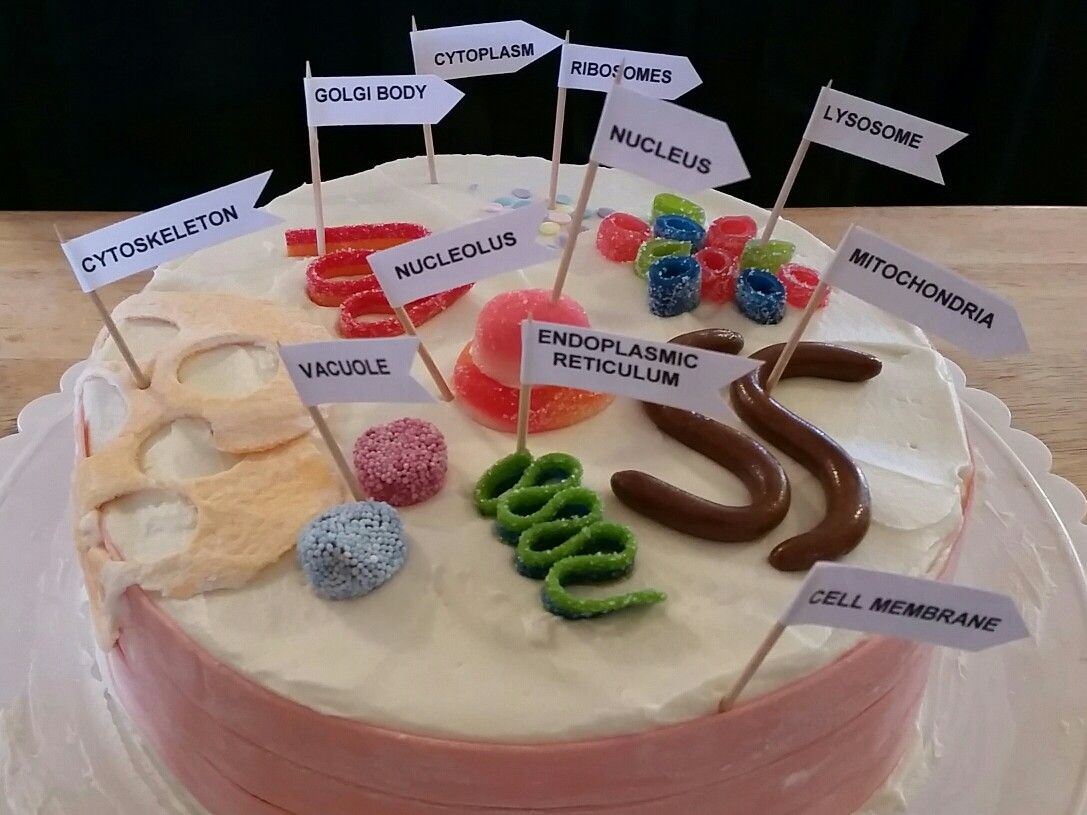 Animal Cell 3d Cake With Images Cell Model Animal Cell