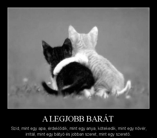 idézetek legjobb barát Pin by Imre Tóth on FB like | Cute animals, Cat people, Animals