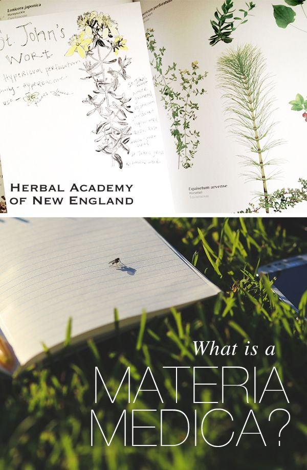 Learn how to craft your own materia medica – instructions and examples