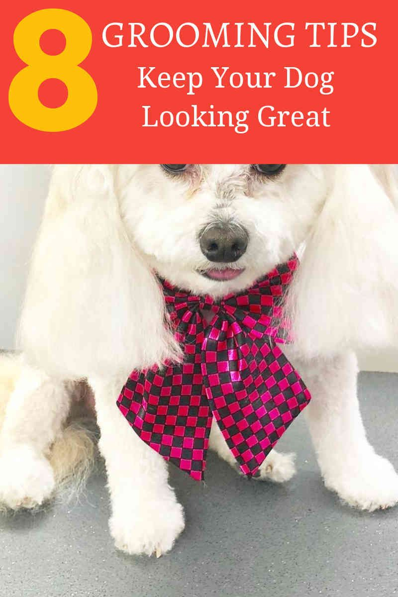 Your Dog Doesn T Like Bathing Grooming Dog Care Tips Dog