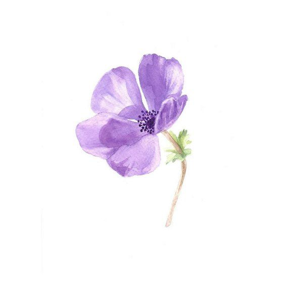 Purple Flower Print Purple Flower Anemone Watercolor Minimalist