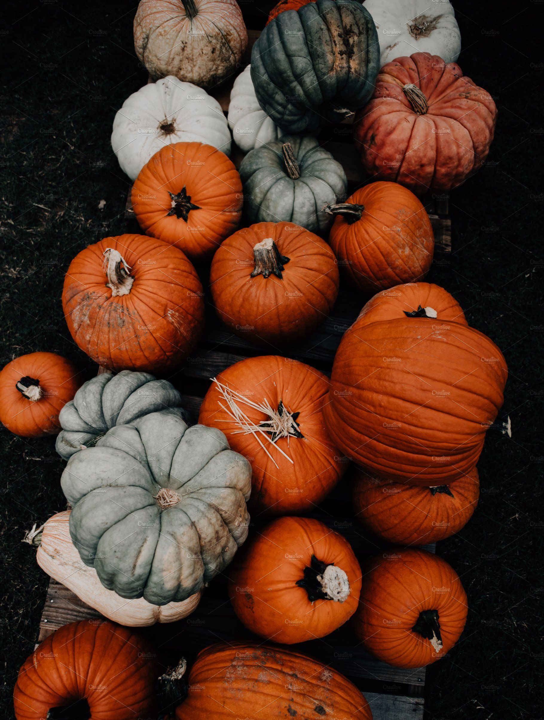 Fall Pumpkin Patch, Farmers Market Pumpkin wallpaper