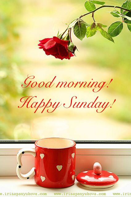 Good Morning Happy Sunday Coffee Hearts Rose Have A Nice Day