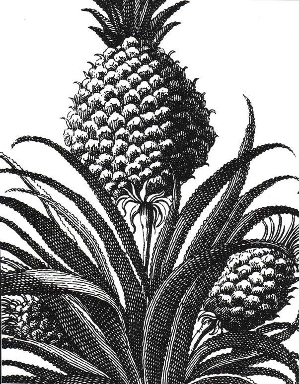Studio Printworks Petite Pineapple Wallpaper