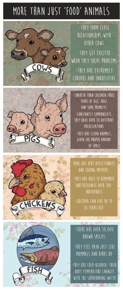 Pin By Anna Malt On Infos Informacoes Food Animals Vegan Animals Animal Rights
