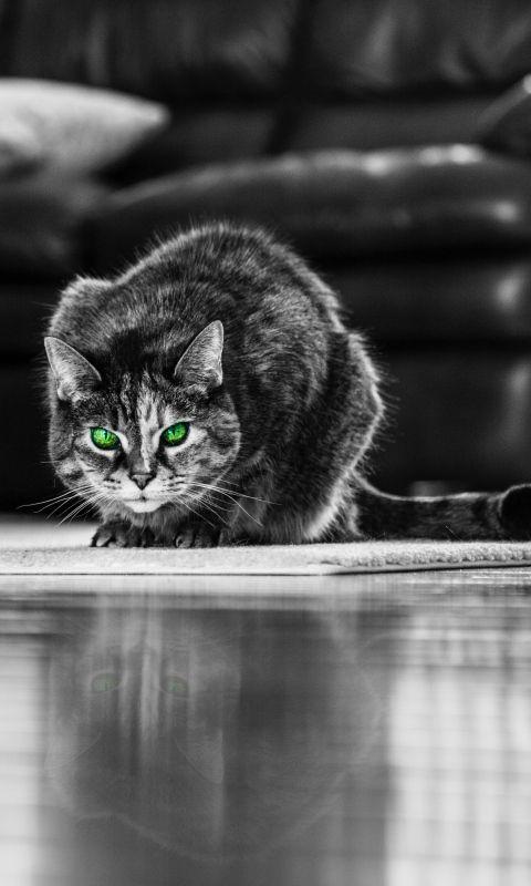 480x800 wallpaper cat green eyed bw