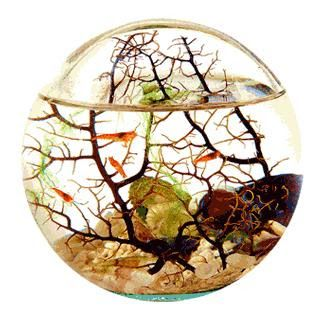 Ecosphere tiny self sustaining ecosystem i want one so for Self sustaining garden with fish