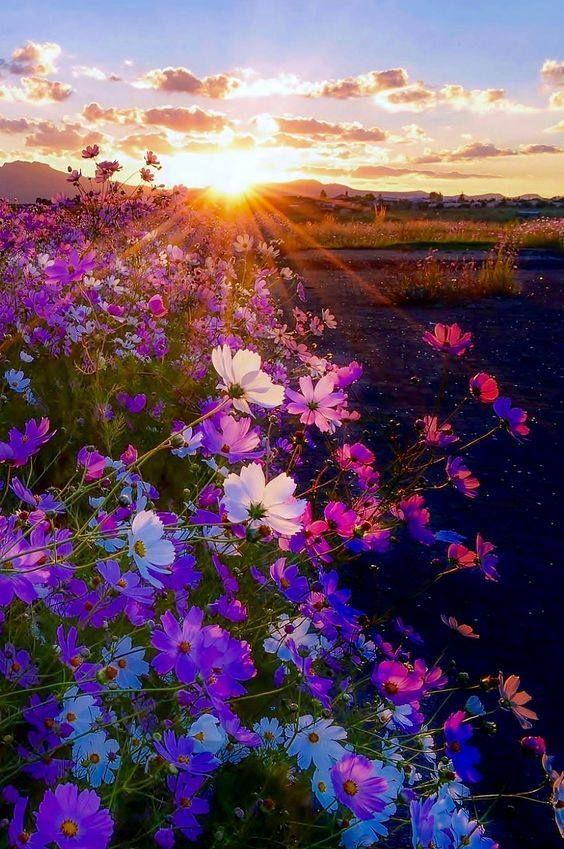 Field Of Flowers Sun Beautiful Nature Nature Photography Beautiful Landscapes