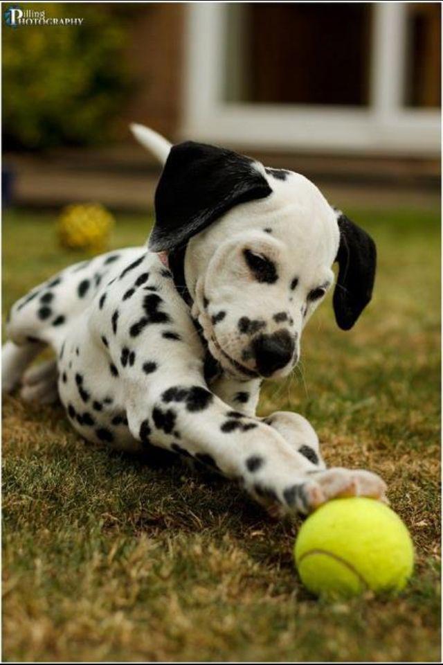 Awwww! Totally my baby dog!!!!!
