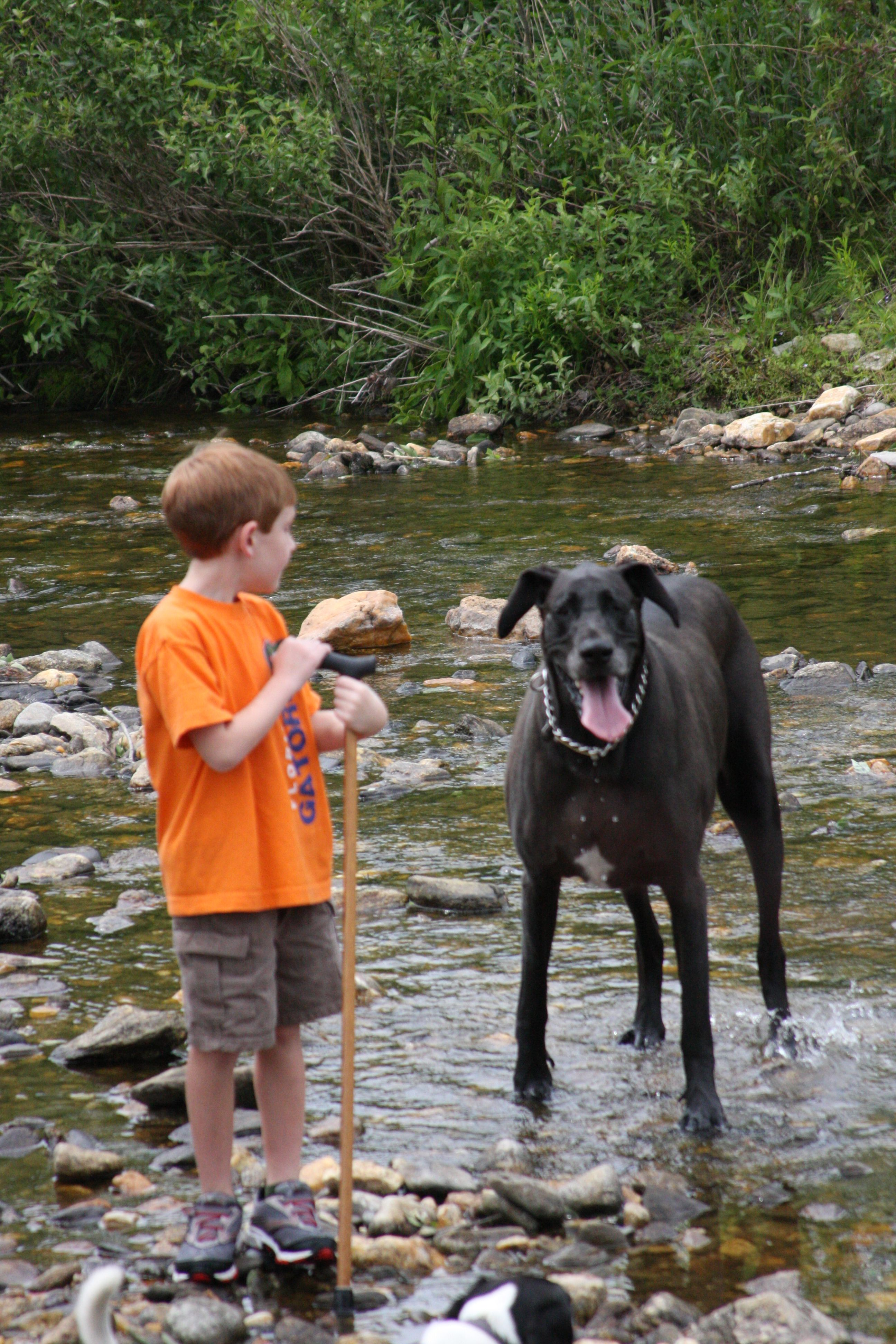 A boy and his dog along a creek off the blue ridge parkway