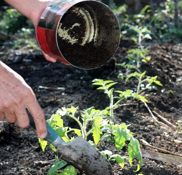 Put These 8 Things in Your TOMATO Planting Hole For The Best – When Do You Start Planting a Garden