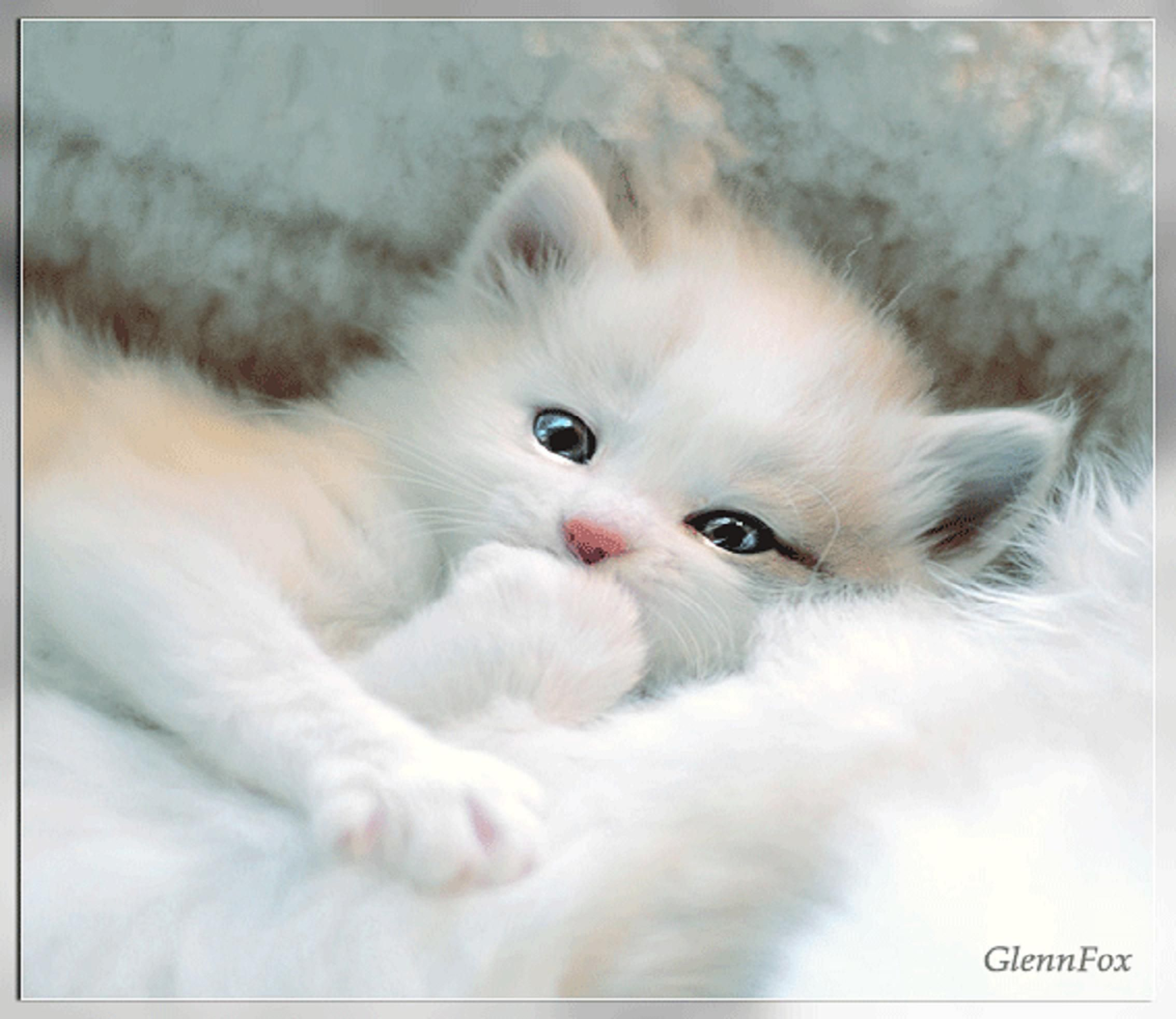 Very Cute Kitty Sleeping Wallpaper Very Cute Animal Cat Colours Cute Fluffy Kitten White Good Night Sweet Dreams Cats Cats And Kittens