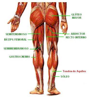 músculos de la extremidad inferior | Fisioterapia | Pinterest ...