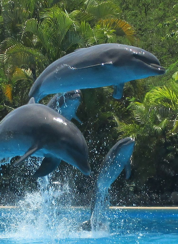 [Dolphins] Cruise sept 15 (54) via G J Reitz