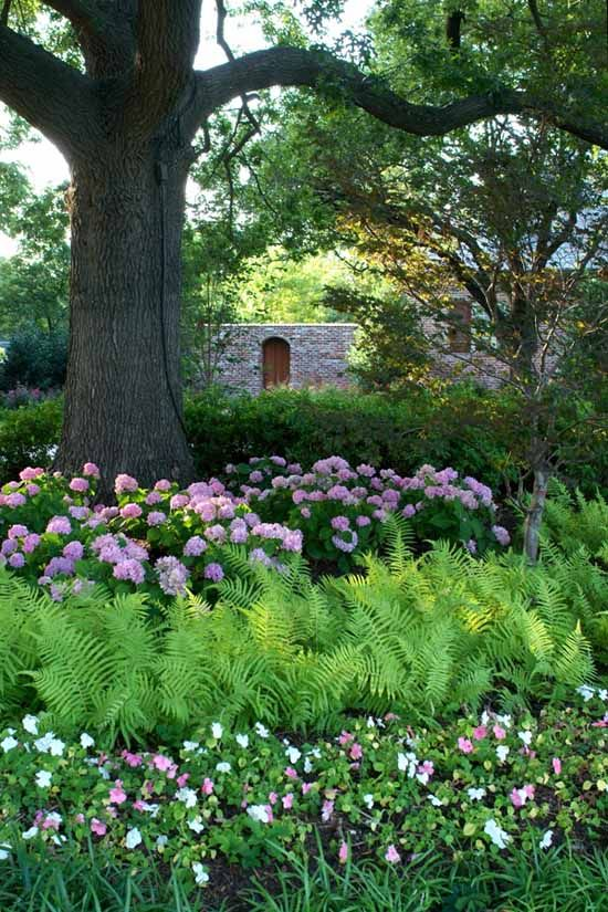 Love big trees underplanted with pretty hydrangeas and ferns.